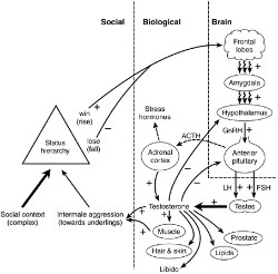 Diagram, Brain and society